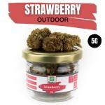 Strawberry CBD OUTDOOR 5G