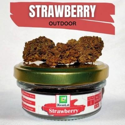 Strawberry CBD OUTDOOR 2,5G