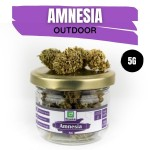 Amnesia CBD Outdoor 5G