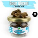 Sour Diesel CBD Outdoor 5G