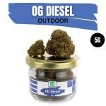 OG Diesel CBD Outdoor 5G