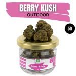 Berry Kush CBD Outdoor 5G